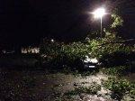 Vom Baum erschlagenes Auto